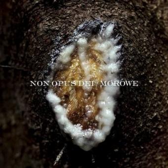 Non Opus Dei / Morowe - Dziwki dwie - Split-DigiCD
