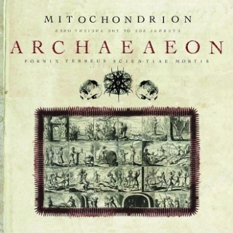 Mitochondrion - Archaeaeon - CD